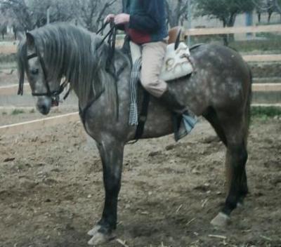 caballo en venta